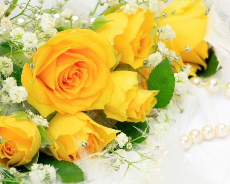 Bài văn tả hoa hồng số 1