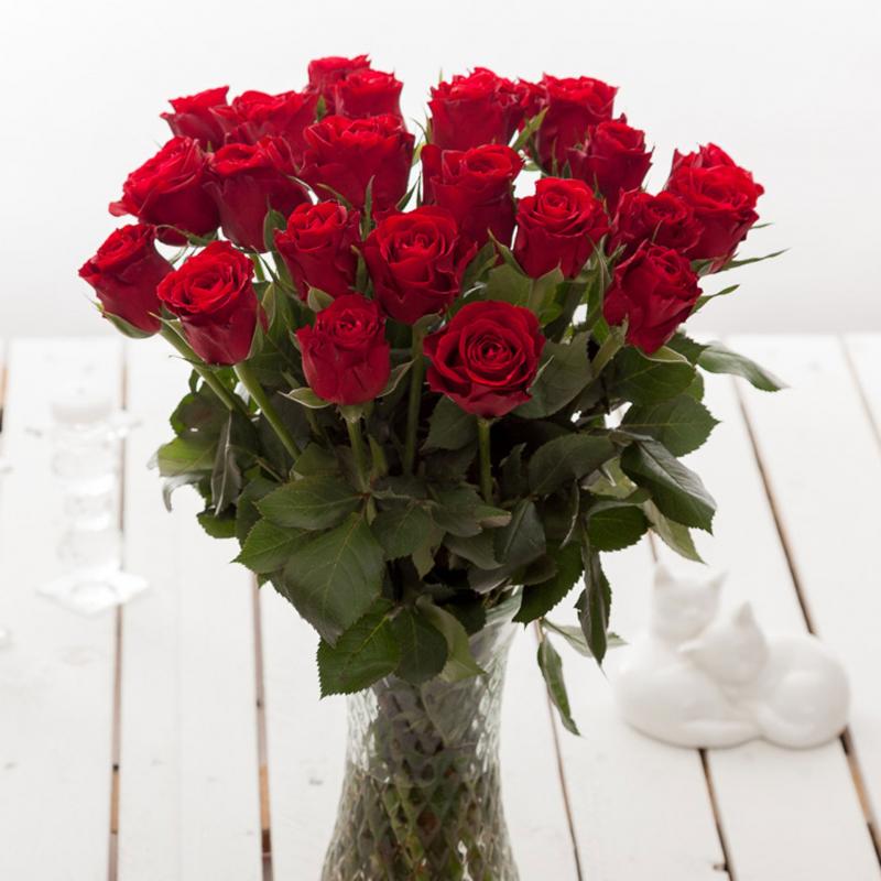 Bài văn tả hoa hồng số 7