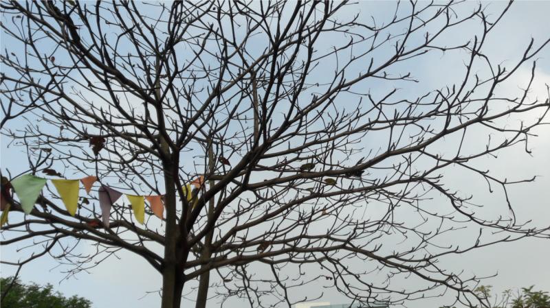 Bài văn thuyết minh, biểu cảm về cây bàng số 2