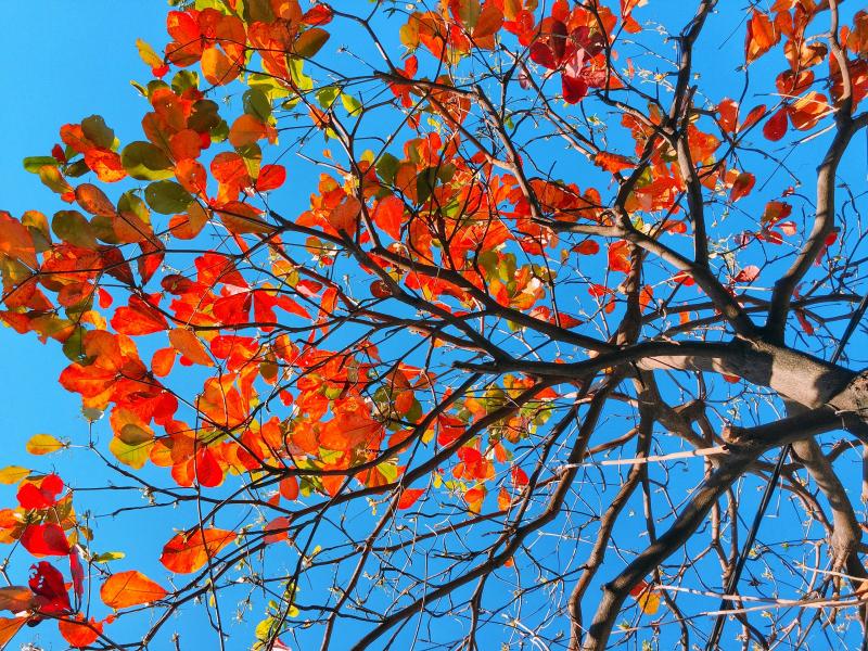 Bài văn thuyết minh, biểu cảm về cây bàng số 12
