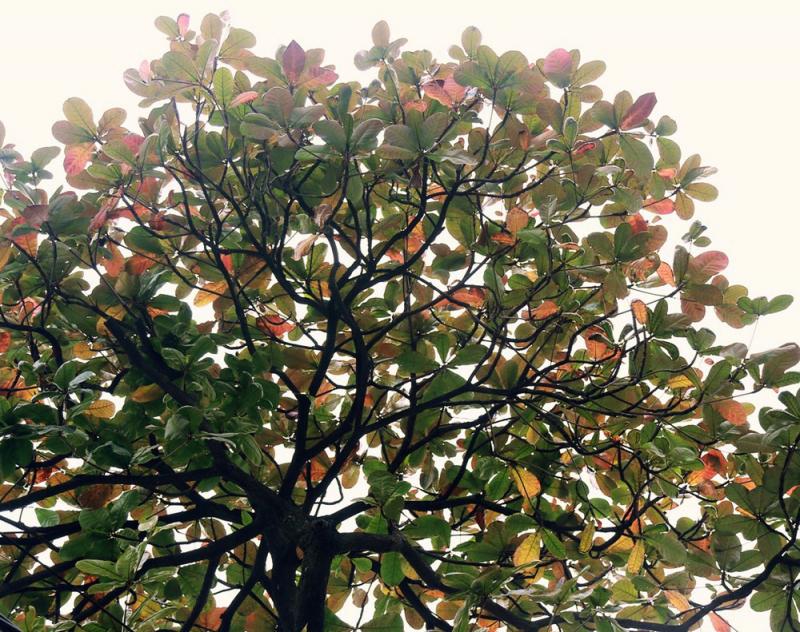 Bài văn thuyết minh, biểu cảm về cây bàng số 7