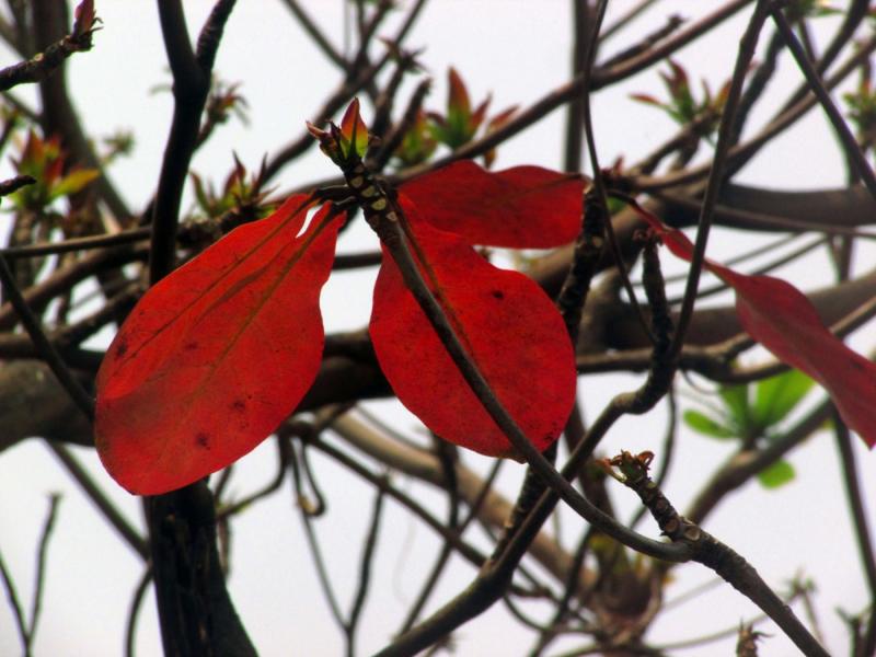 Bài văn thuyết minh, biểu cảm về cây bàng số 8