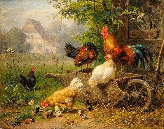 Bài văn thuyết minh về con gà