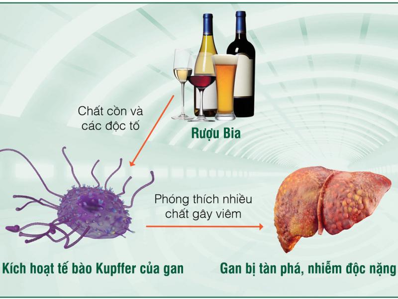 Bài văn thuyết minh về tác hại của rượu số 1