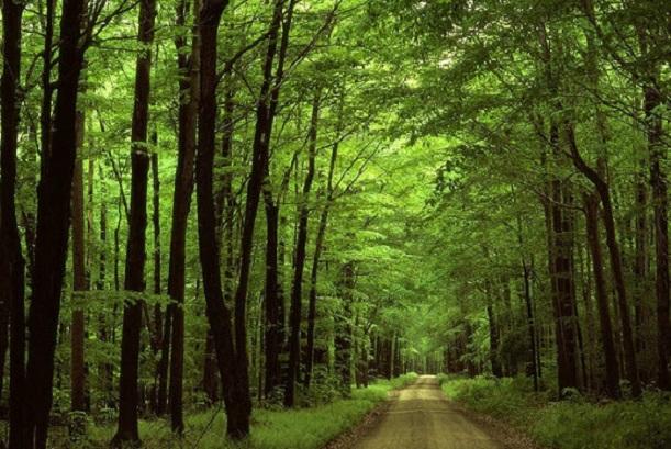 Bài văn phân tích hình tượng rừng xà nu số 3