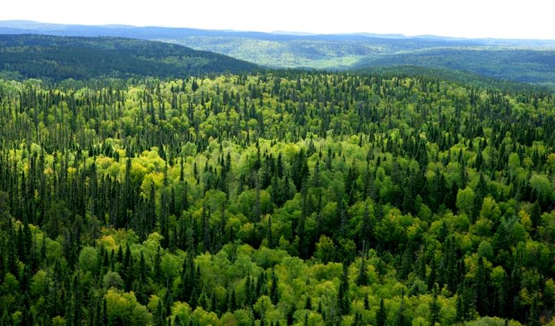 Bài văn phân tích hình tượng rừng xà nu số 5