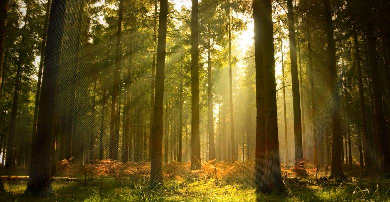 Bài văn phân tích hình tượng rừng xà nu số 8