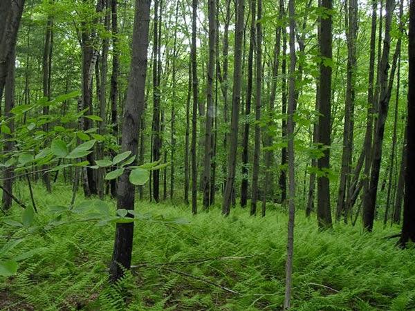 Bài văn phân tích hình tượng rừng xà nu số 10