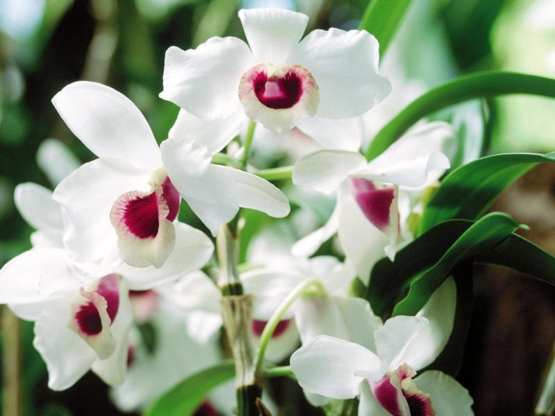 Bài văn tả hoa lan số 1