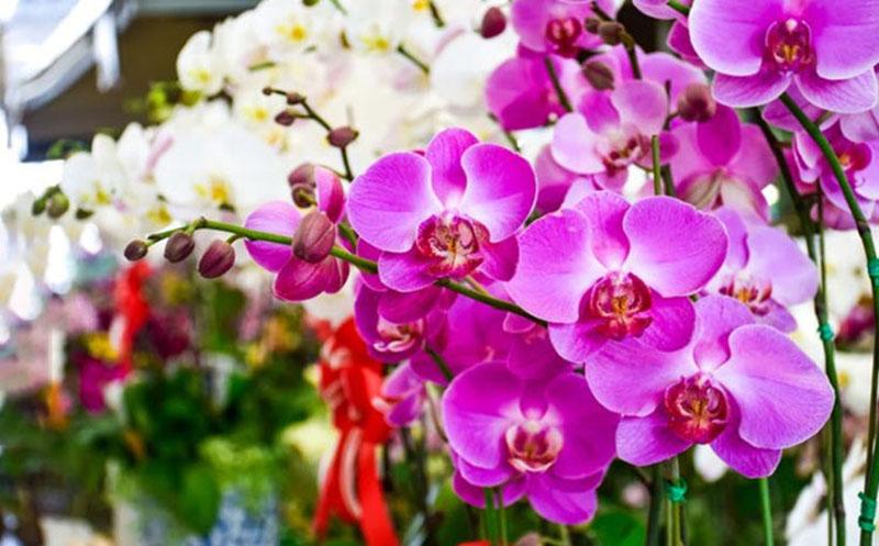 Bài văn tả hoa lan số 3