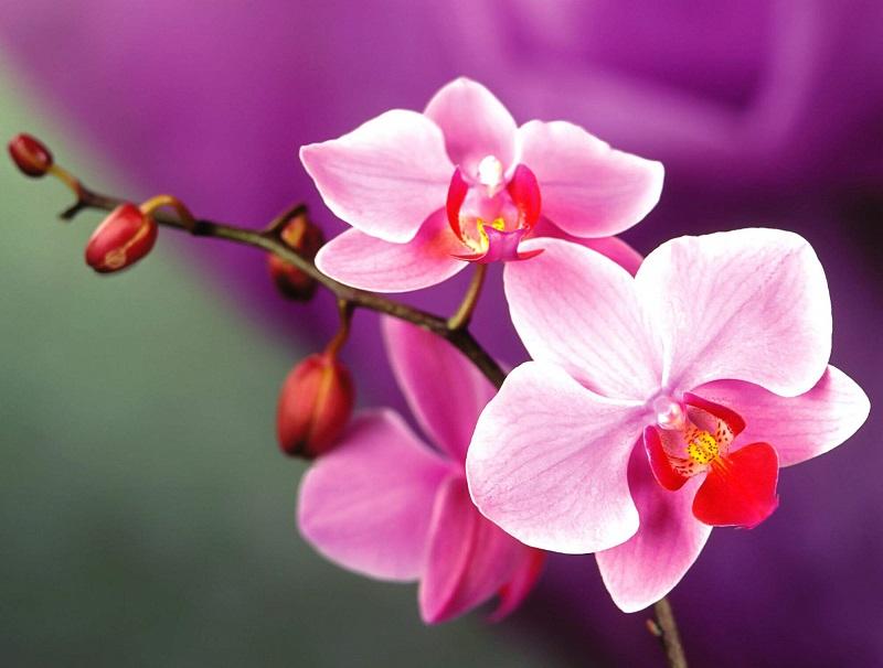 Bài văn tả hoa lan số 5