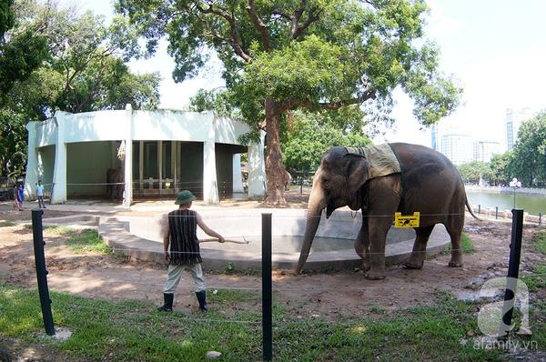 Chú voi ở vườn bách thú