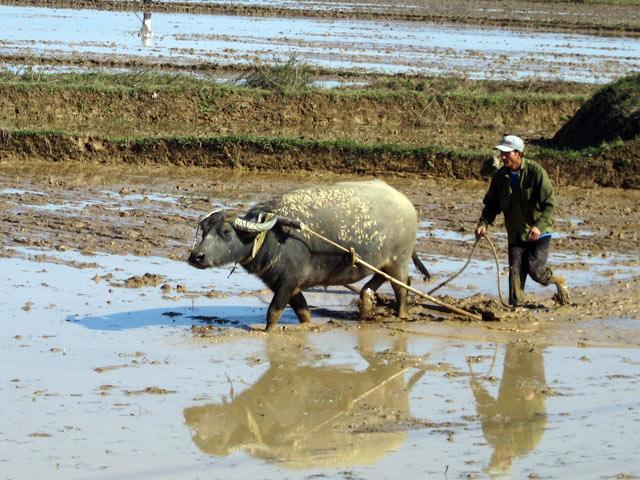 Dàn ý bài văn: Tả bác nông dân đang làm việc