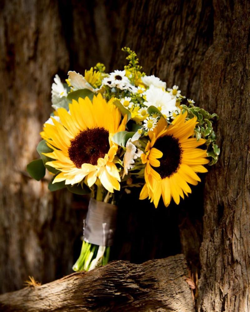 Dàn ý bài văn: Tả cây hoa hướng dương (bài số 2)