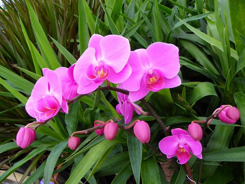 Dàn ý bài văn: Tả cây hoa lan
