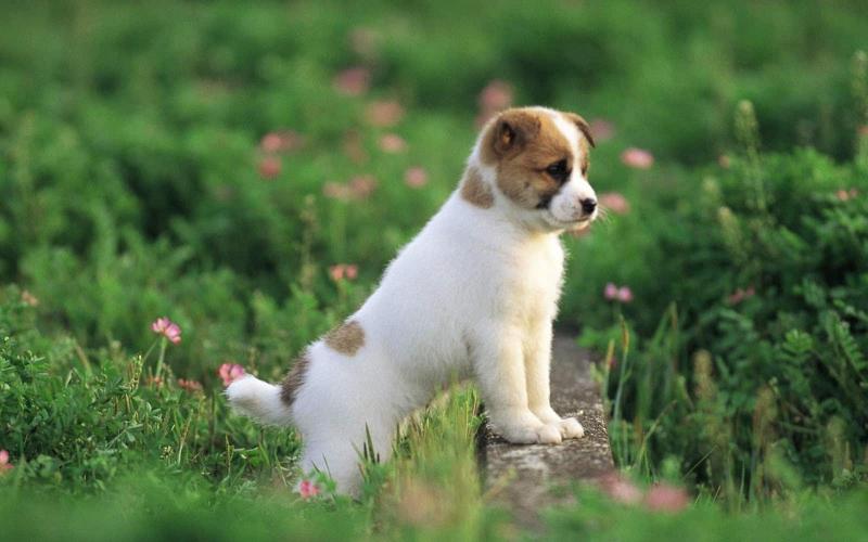 Dàn ý bài văn: Tả con chó (bài số 2)