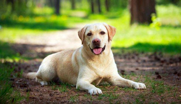 Dàn ý bài văn: Tả con chó (bài số 11)