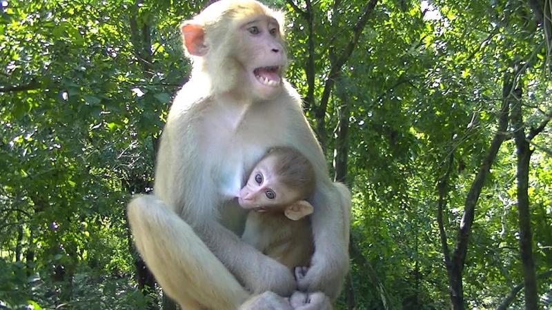 Dàn ý bài văn: Tả con khỉ