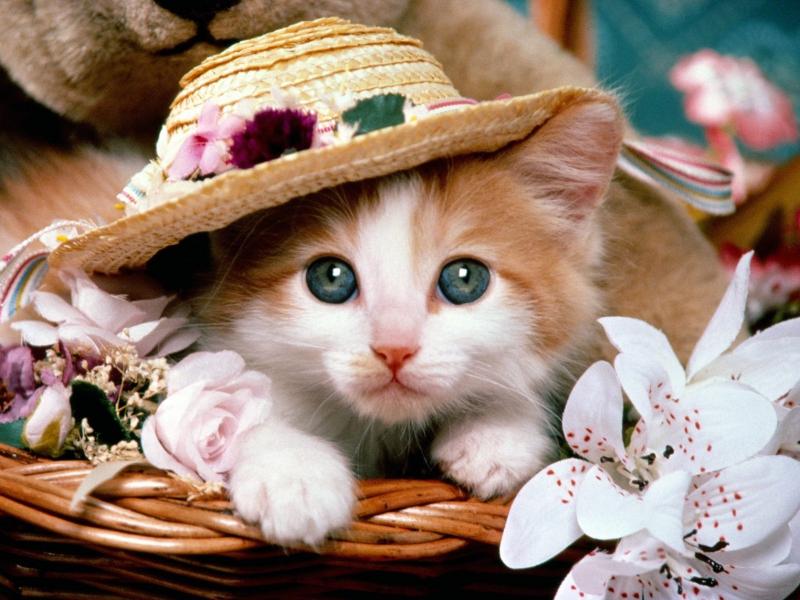 Dán ý bài văn: Tả con mèo
