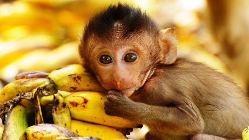 Khỉ con làm trò