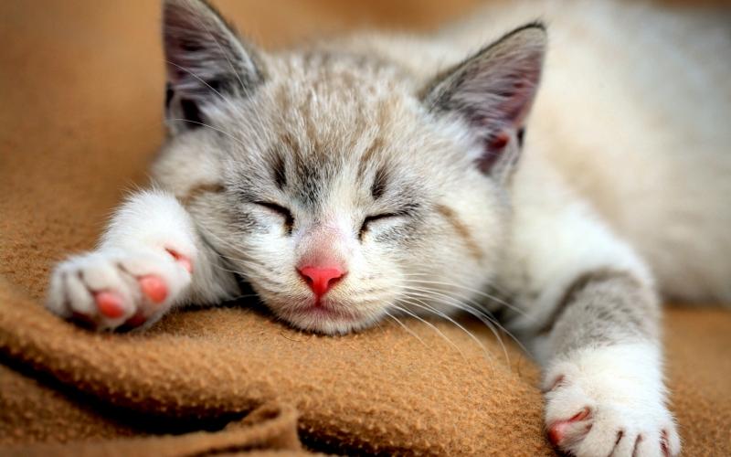 Mèo con xinh xắn
