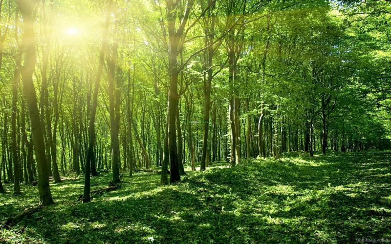Bài văn chứng minh rằng bảo vệ rừng là bảo vệ cuộc sống của chúng ta số 2