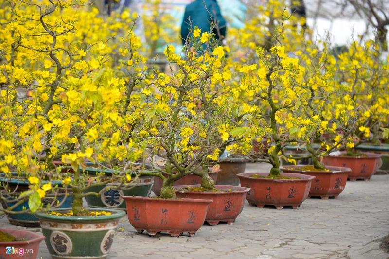 Bài văn tả cảnh chợ hoa ngày tết quê em số 10